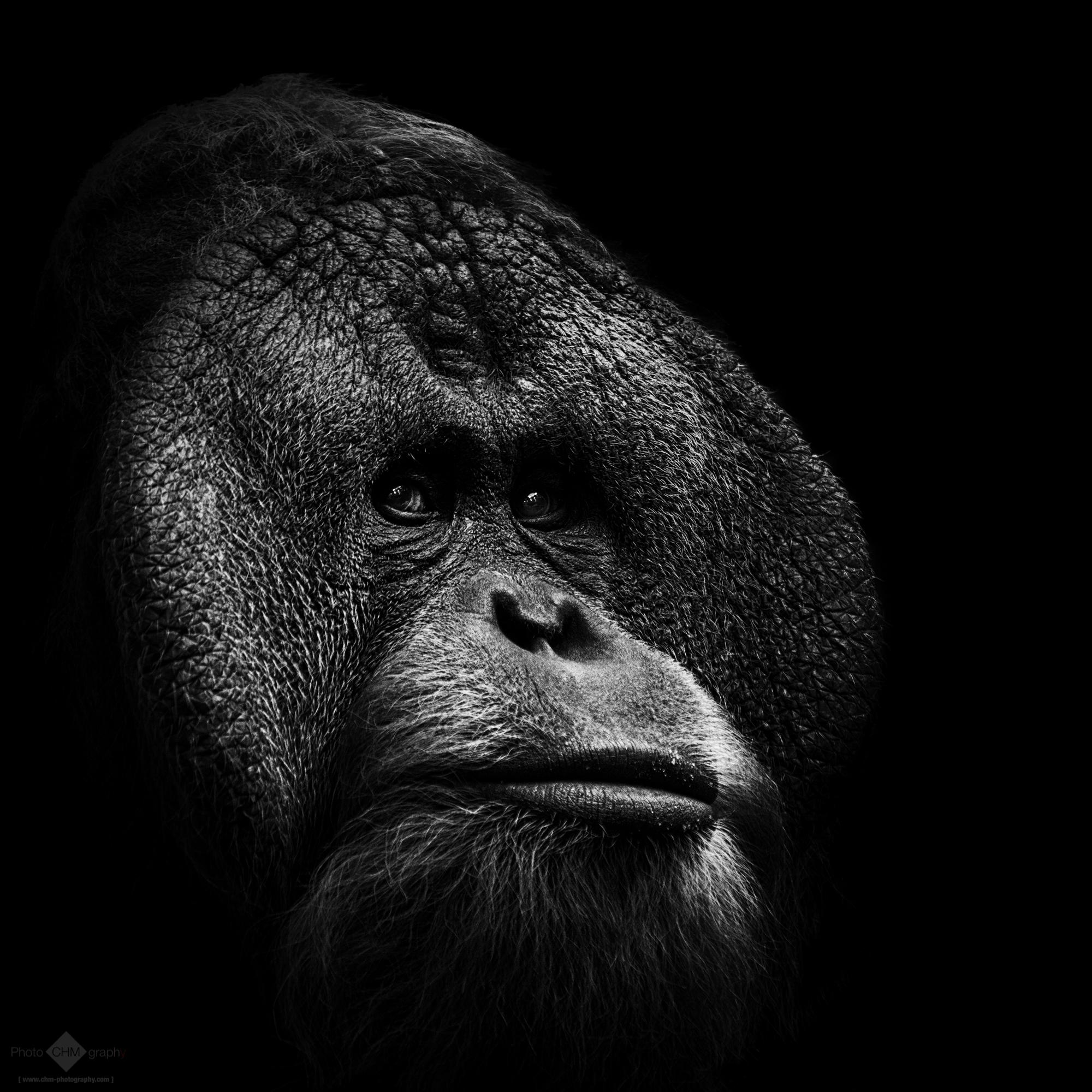Animals (monochrome)