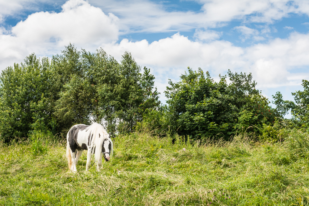 A lonely horse - rural England in industrial Newcastle
