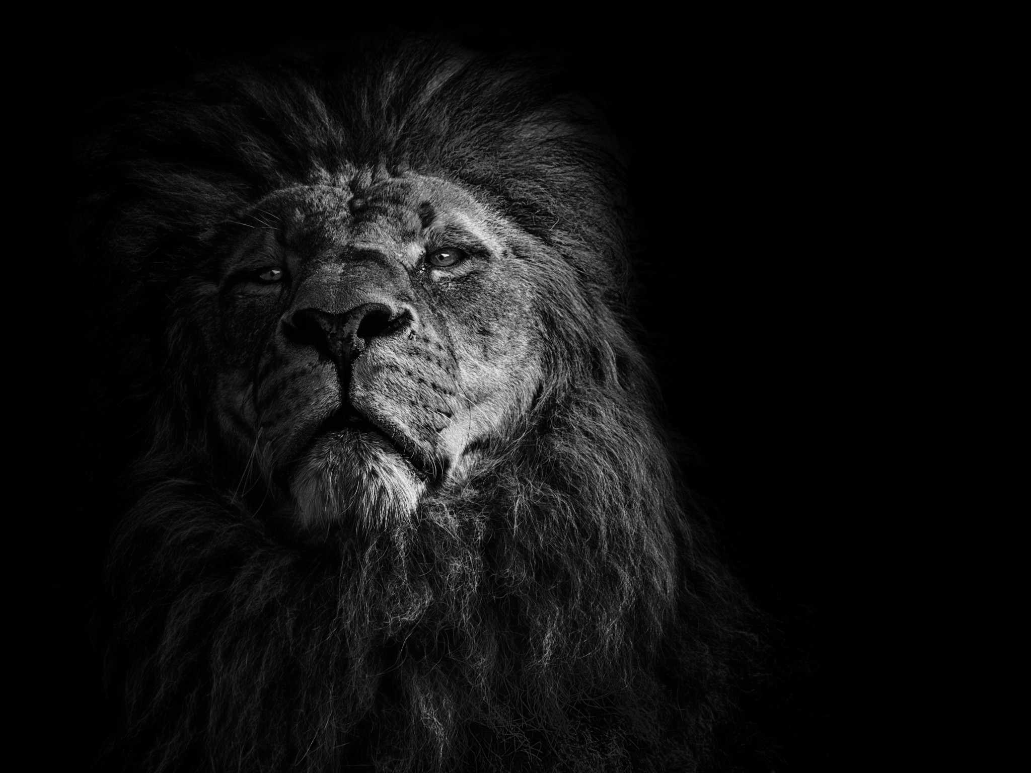 8k Animal Wallpaper Download: CHM-Photography