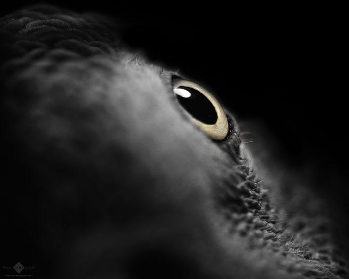 The Parrot's Eye #3