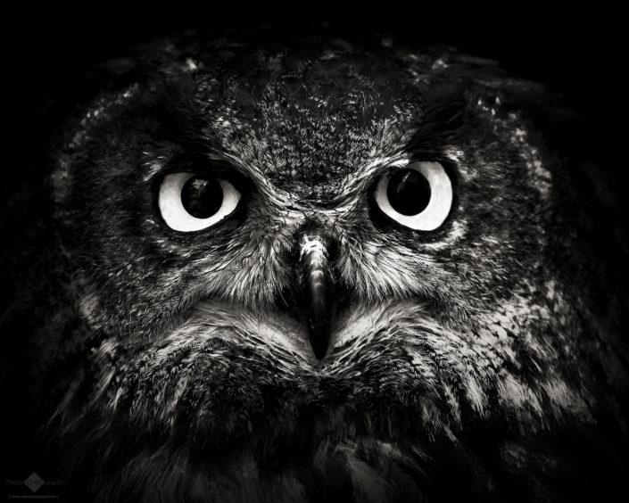 Eagle Owl #1