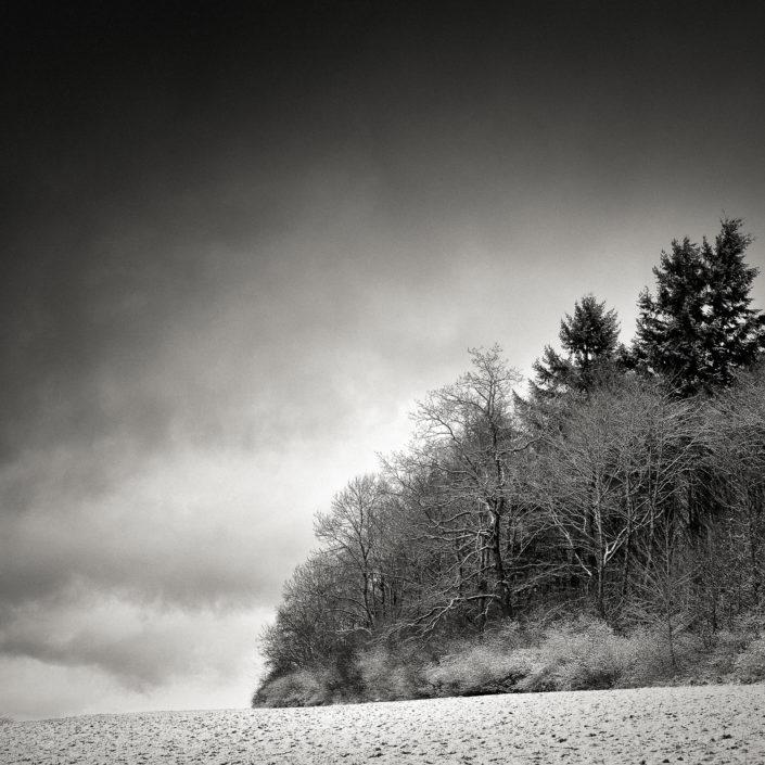 Copse in Winter
