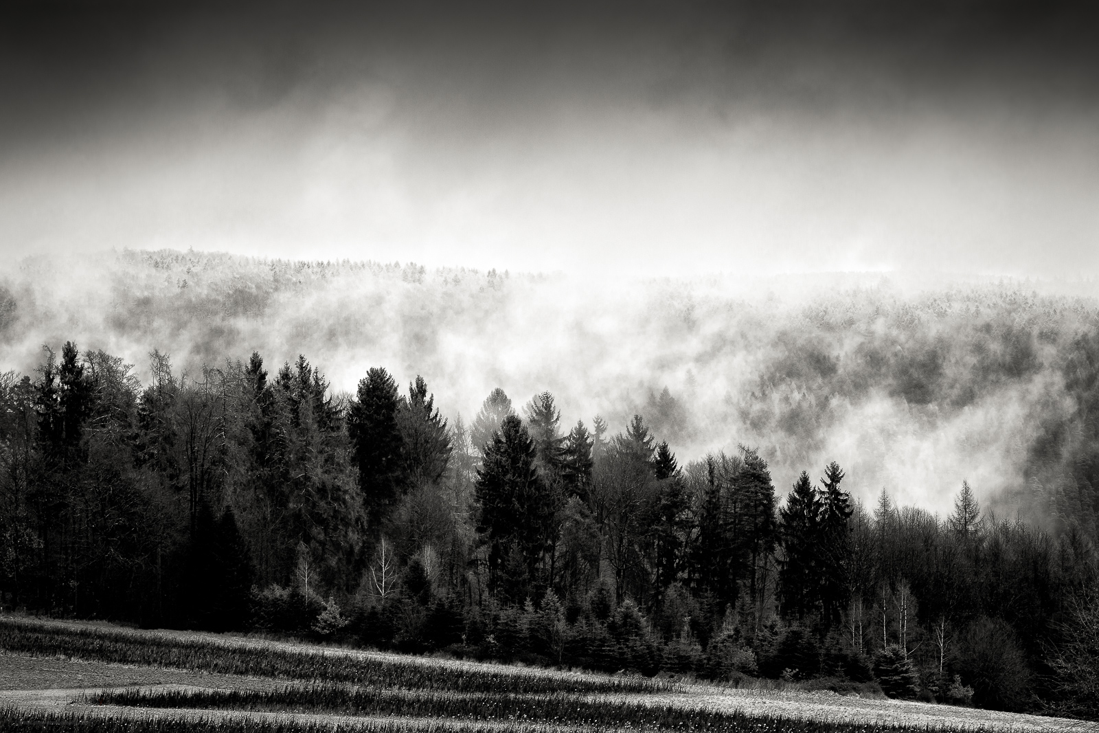 Mist over the Forest