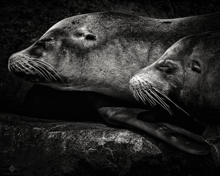 Three Seals