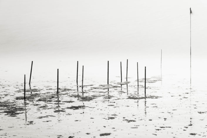 Sticks in the Mudflats