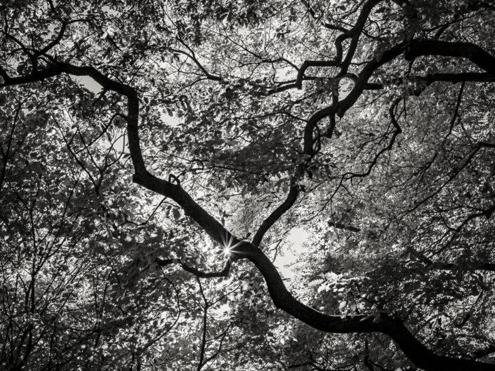 Treetops from Below