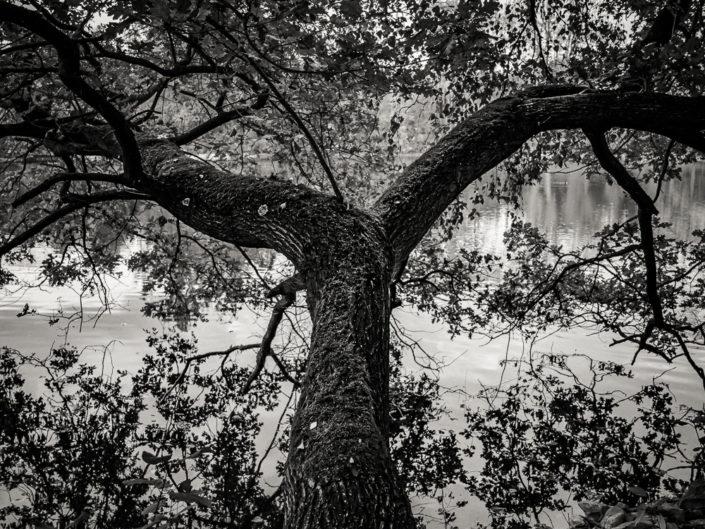 Tree ny the Lake