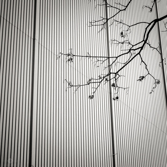 Twigs and Walls