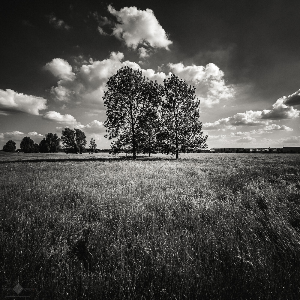 Trees in the Field #2