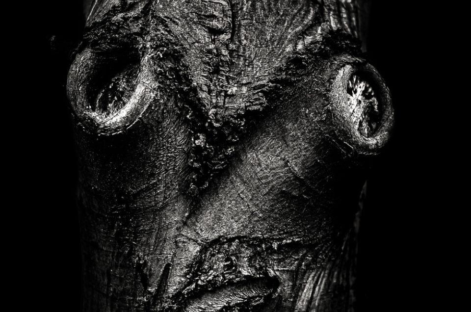 Tree Face #1