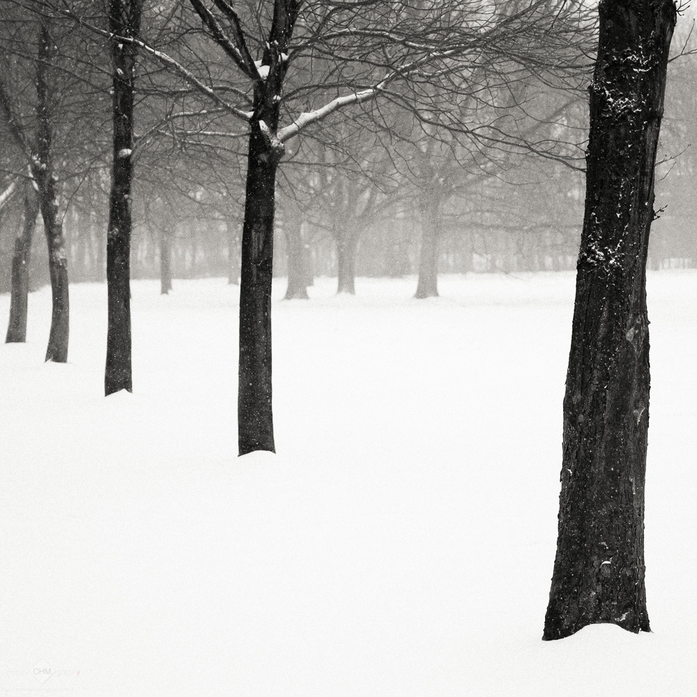 Trees in the Park #7