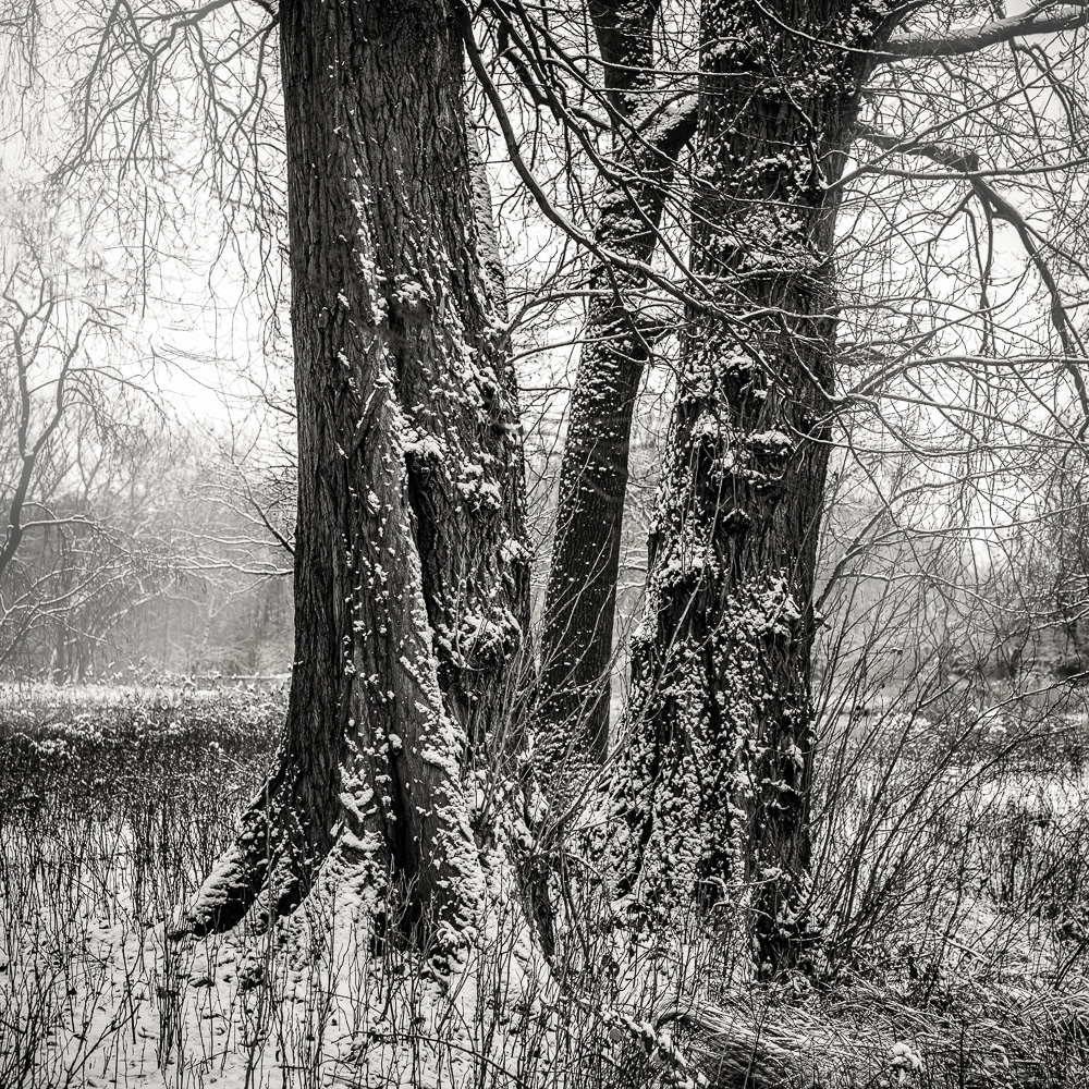 Trees in the Park #9